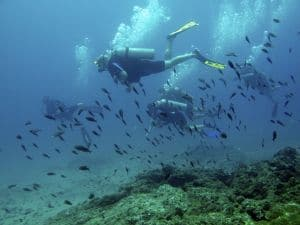 open water course dives