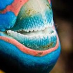 parrotfish4