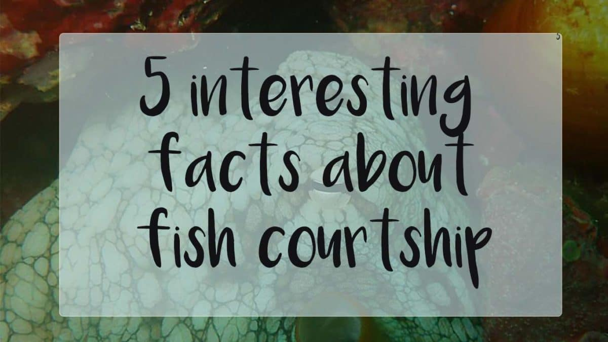 5 facts about fish courtship
